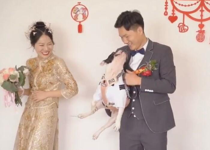 'Tiểu tam' bốn chân ngang nhiên sút bay cô dâu, độc chiếm chú rể trong ngày cưới