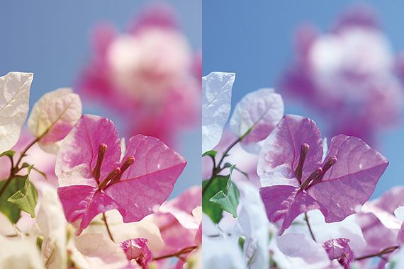 Tìm hiểu về cân bằng trắng trong nhiếp ảnh