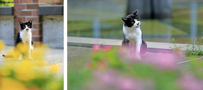 Những ý tưởng chụp ảnh Mèo tuyệt đẹp ở môi trường ngoài trời