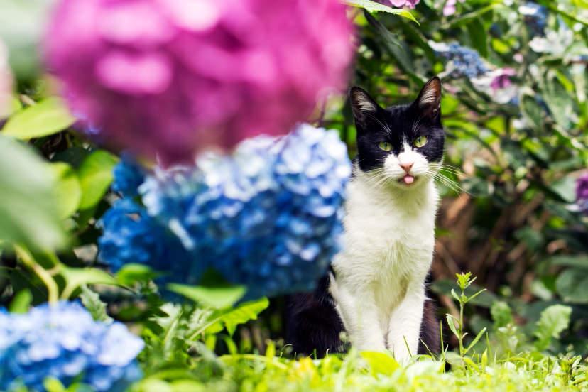 Ảnh mèo, chụp bằng ống kính EF100mm f/2.8L Macro IS USM