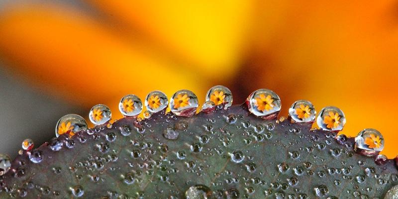 Một số kinh nghiệm khi chụp ảnh hoa cỏ mà Photographer nên biết