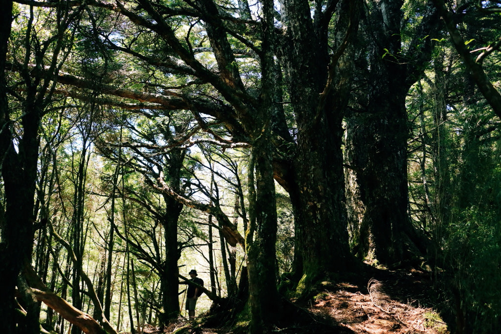 Ghi Lại Đời Sống Trong Môi Trường Ngoài Trời Tuyệt Đẹp: Chuyến Đi Cắm Trại Của Nhiếp Ảnh Gia Chuyên Nghiệp Trong Ảnh