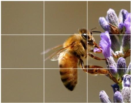 Quy tắc một phần ba (1/3) trong nhiếp ảnh