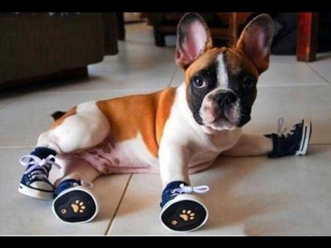 Tại sao cộng đồng nuôi thú cưng tẩy chay giày cho chó ?