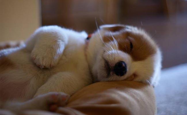 Dấu hiệu của một chú chó hạnh phúc