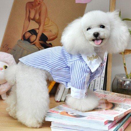 Tái chế quần áo cũ thành trang phục cho cún cưng diện Tết