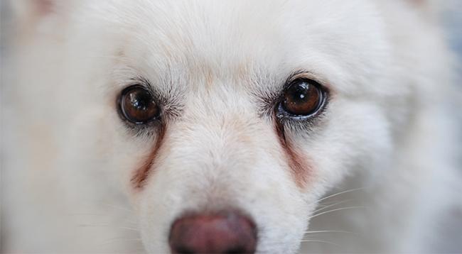 5 loại thuốc nhỏ mắt cho chó mèo được đánh giá cao nhất