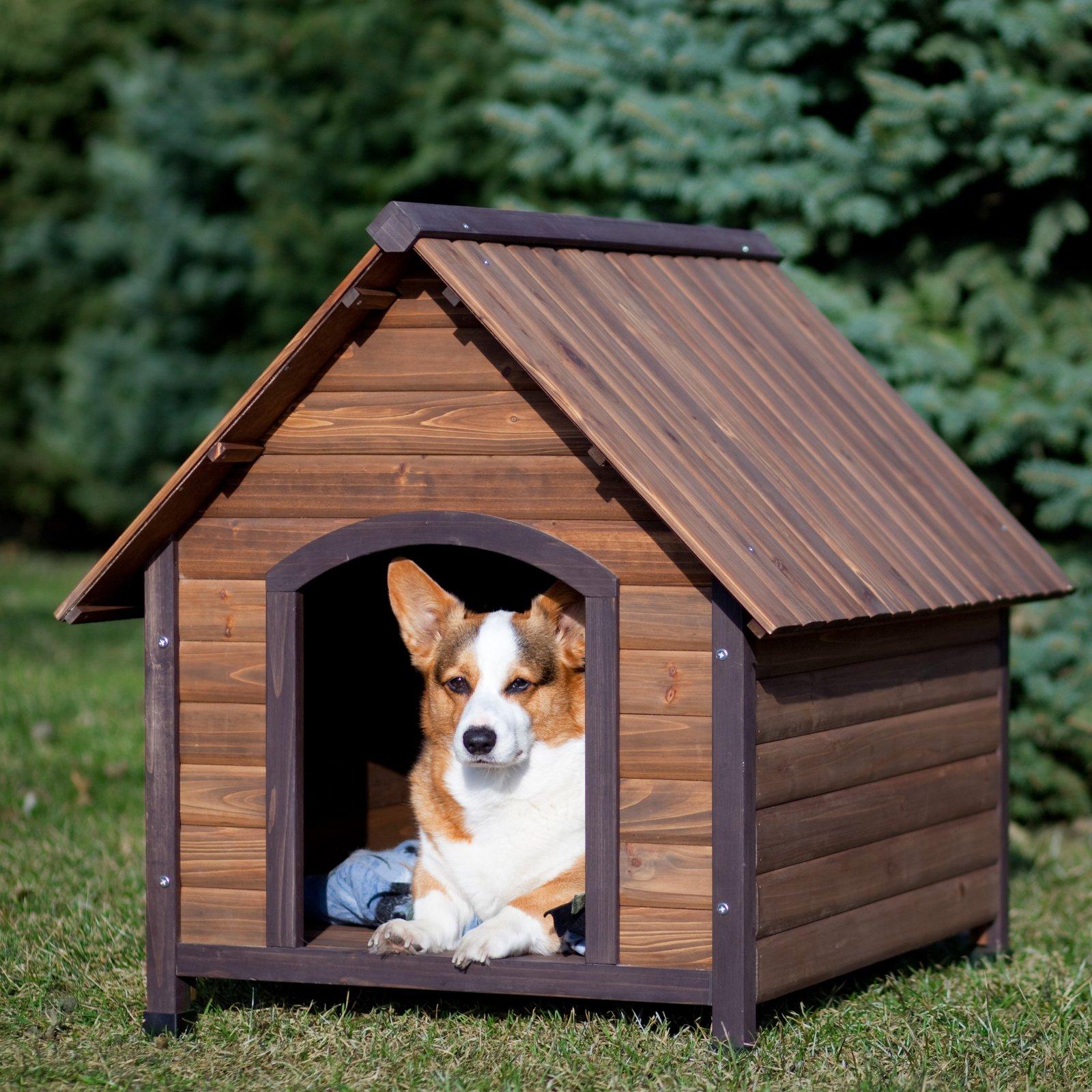 Top 4 nhà cho chó con bền đẹp siêu tiết kiệm