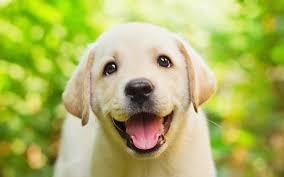 Những tiêu chuẩn để đánh giá sức khỏe của chó