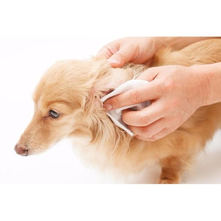 5 loại thuốc trị viêm tai chó mèo an toàn và hiệu quả