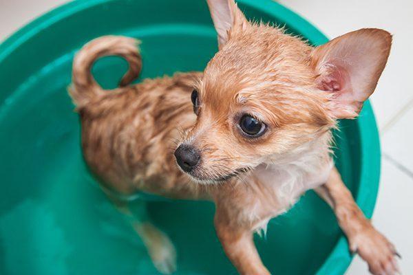 Chó bị cảm lạnh dấu hiệu và cách chữa trị hiệu quả