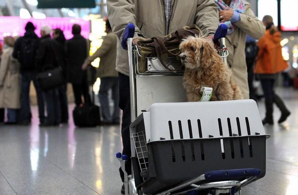 Cần chuẩn bị những gì khi mang thú cưng lên máy bay?