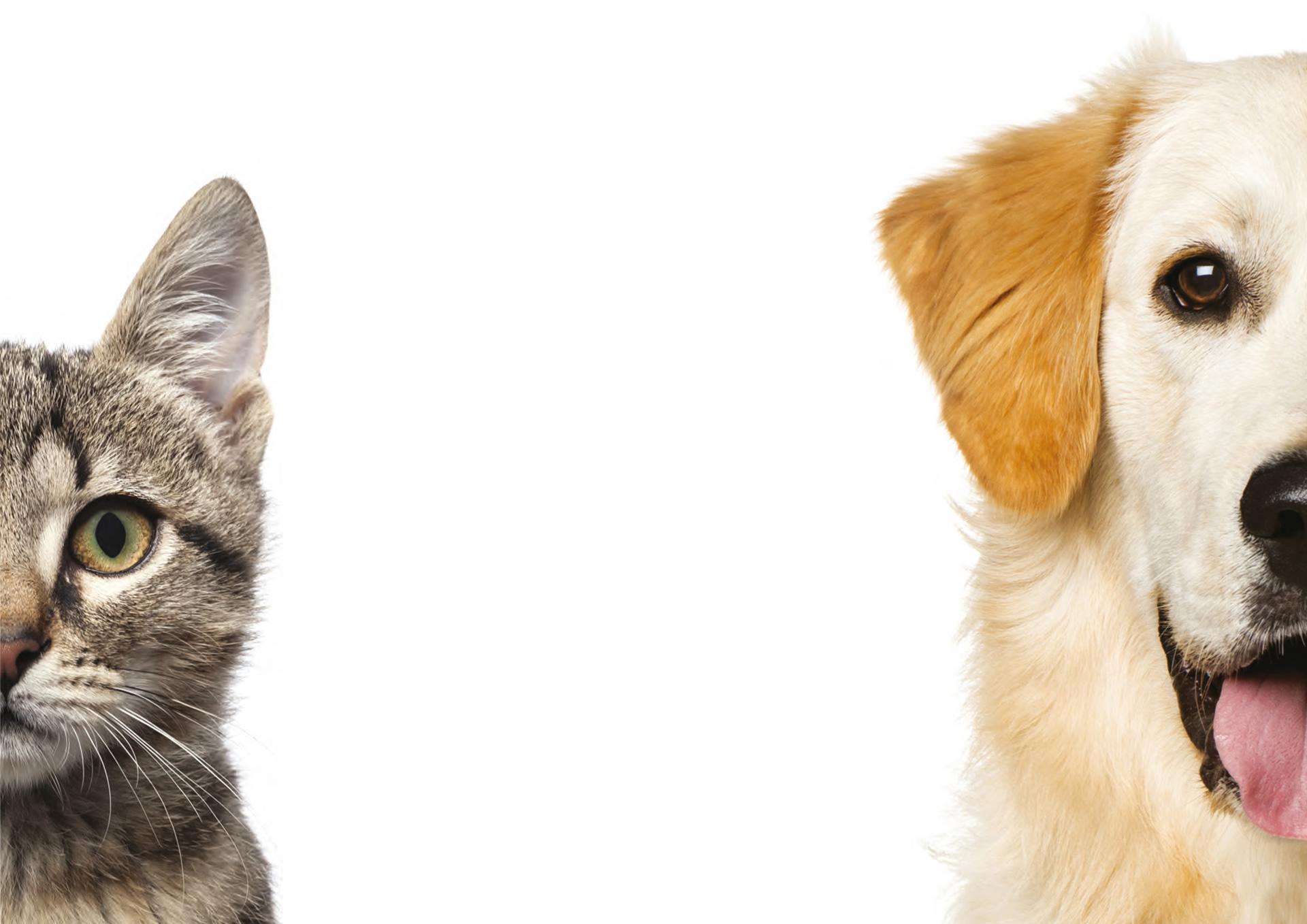 Bệnh viêm khớp của chó, mèo và các triệu chứng
