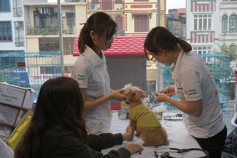 Grand Opening Petcity Kim Mã - Thiên đường cho thú cưng