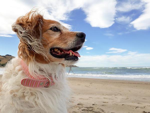 Nguyên nhân và cách điều trị dứt điểm khi chó bị sổ mũi