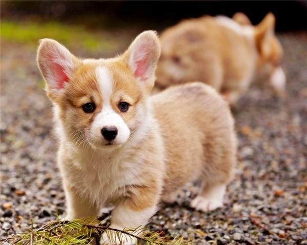 Những câu hỏi giúp bạn chọn giống chó nuôi phù hợp với điều kiện sống