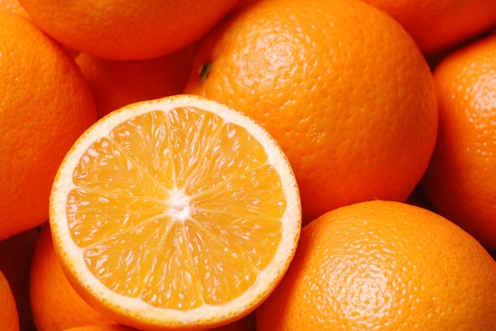 Chó và trái cây họ cam