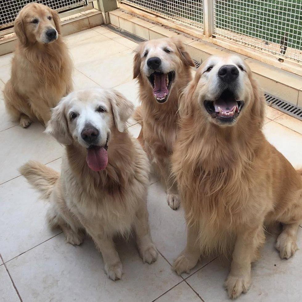 Những giống chó thông minh và giá siêu đắt