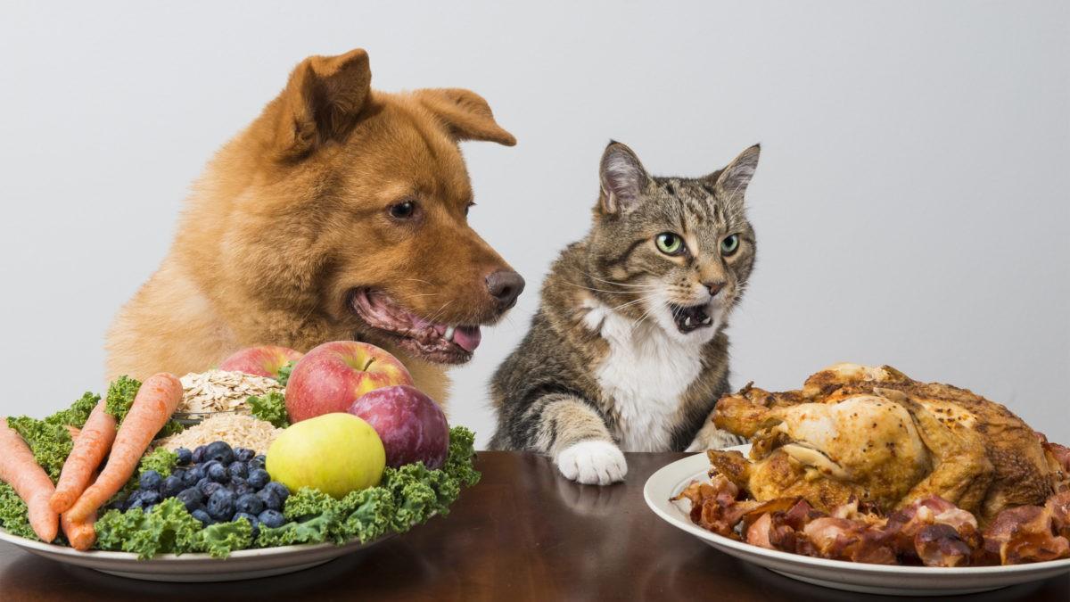 Dinh dưỡng cho cún cưng – như thế nào là hợp lý?