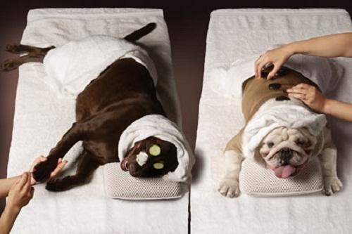 Dịch vụ spa cho chó mèo có thật sự tốt ?