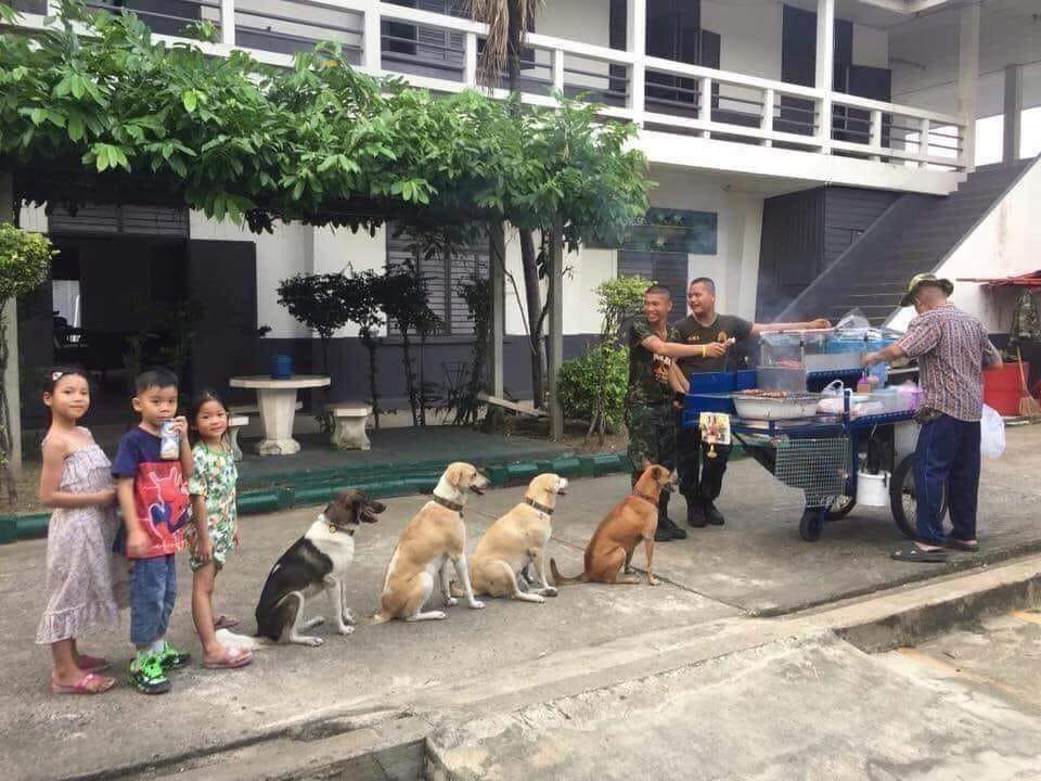 Góc ý thức: Bốn chú chó chuyên đi ăn trực vẫn không quên xếp hàng chờ đến lượt