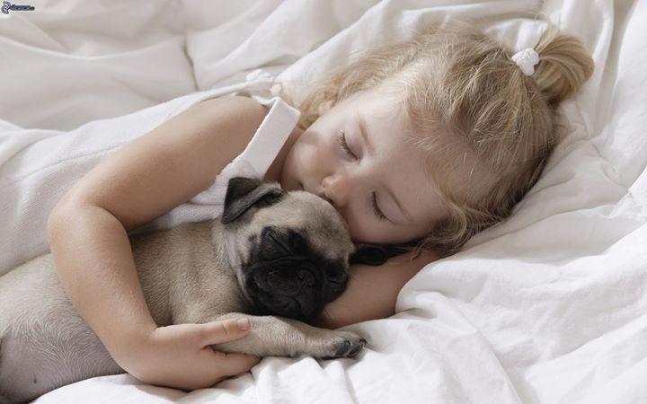 Cách nuôi chó con không có mẹ hoặc mới tách mẹ