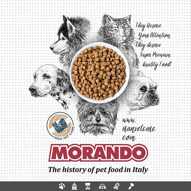 Chó không chịu ăn hạt (thức ăn khô) !