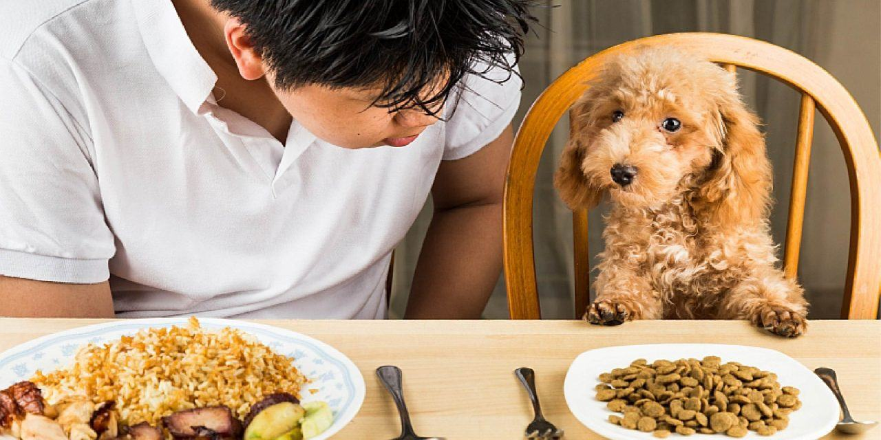 Thực đơn hàng ngày cho chó 2 - 4 tháng
