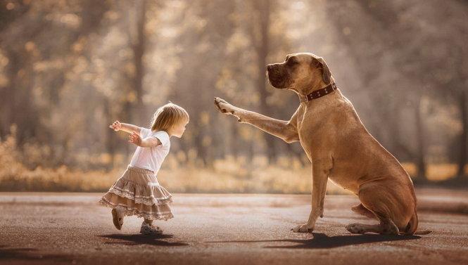 Những hoạt động để chú chó già luôn cảm thấy vui vẻ