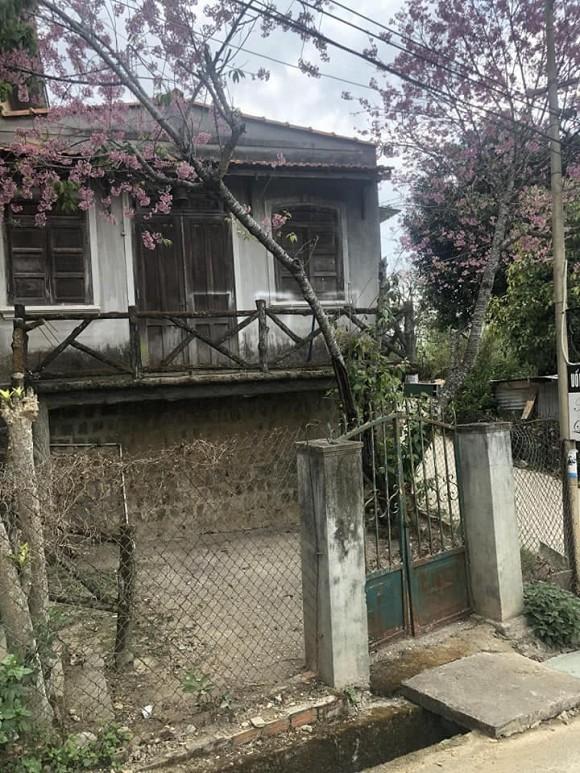 Trót mê cây anh đào trước ngôi nhà hoang, chàng trai mua rồi cải tạo: Thành quả ai cũng bất ngờ