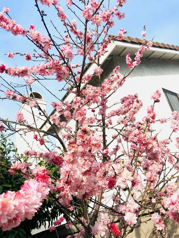 Không gian sân vườn nhỏ xinh như 'chốn cổ tích' của ca sĩ Trúc Linh ở Mỹ