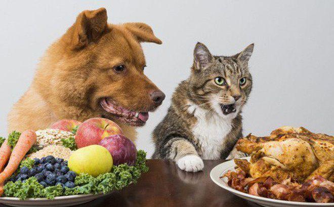 Chất béo và dầu: Lợi hay hại cho sức khỏe của chó?